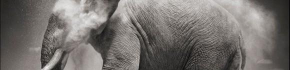 litenelefant_beskuren